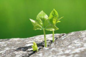 О новой жизни и вреде сомнений
