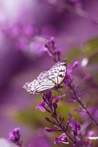 Из гусеницы в бабочку (о раскрытии души)