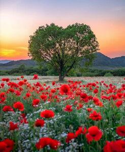 О смысле жизни и нашей ценности для мира